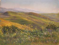 Terri Taber - Orella Ranch Gaviota