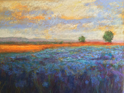Suzanne Leslie - Blue Flower Field at Sunset