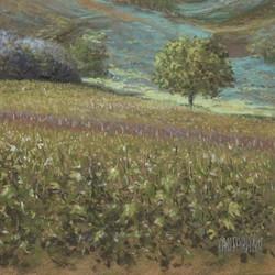 Laurent Chantraine - No. 356 - Sancerre