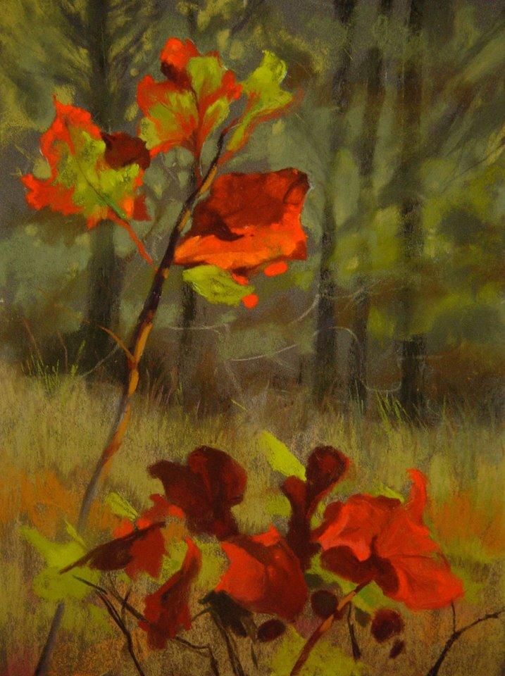Jude Tolar - Backlit Oak Leaves