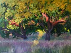 Nancy Paris Pruden - Oak At Sunrise