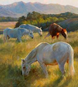 Susan Blackwood - Montana Grazing