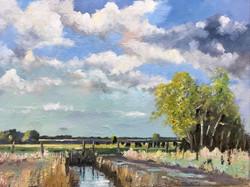 Mike Samson - Jame's Cattle at Stodmarsh