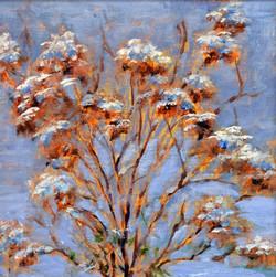 Tamar Rudavsky - Snow Hydrangeas