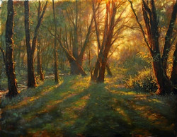 Michael Orwick - Morning Forest
