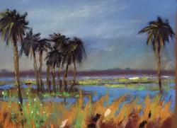 Mark Price - Florida Landscape