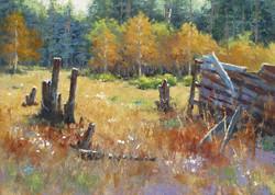 Steve Whitney - Old Field