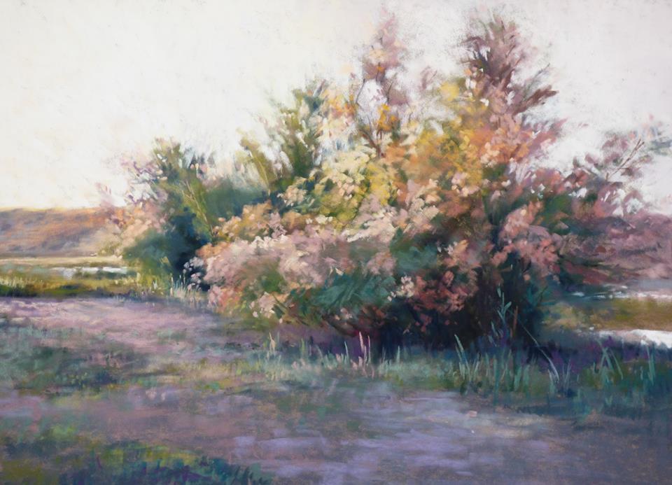 Marjorie Vincent - Tamaris in Bloom