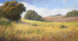 Sherri Cassell - Santa Ynez Hills