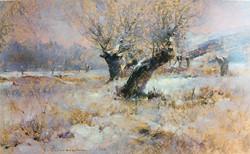 Javad Soleimanpour - Old Trees