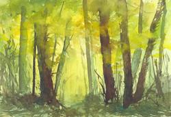Zan Barrage - Forest Light