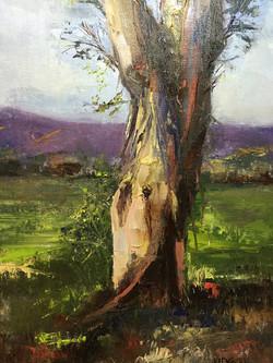JoAnne Wood Unger - Eucalyptus Light