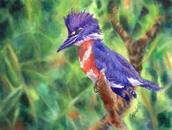 Barb Capeletti - Purple Kingfisher