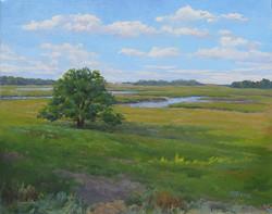 Jeanne Pierce - Essex Marsh