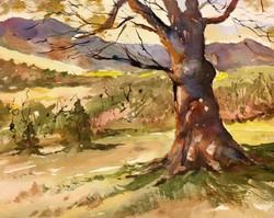 David Finnell - Tree in Albemarle