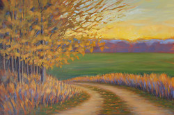 Kathy Mohl - Branching Out