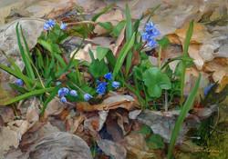 Gelena Pavlenko - Spring Palette