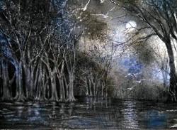 Liz McGee - Backwater Bayou