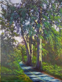 John Nichols - Eucalyptus Grove, UC Davis Arboretum