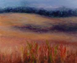 Donna Pierce-Clark - Hampton Bean Fields