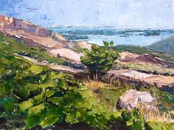Maggie Capettini - Pitch Pine