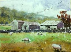 Dominik Baricevic - Sunbathing Sheep