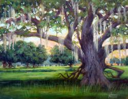 Sharon Repple - Oak at Sunset