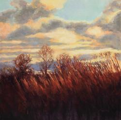 Jane Penfield - November Light