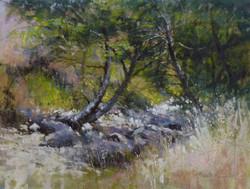Barbara Benedetti Newton - Sweet Creek.jpg