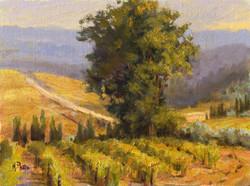 Mary Pettis - Tuscan Vineyard