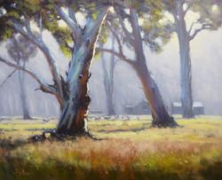 John Rice - Misty Morning