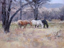 Ginny Butcher - Autumn's Horses