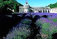 ProvenceLavSenaqueII.jpg