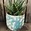 Thumbnail: Succulent in Pot