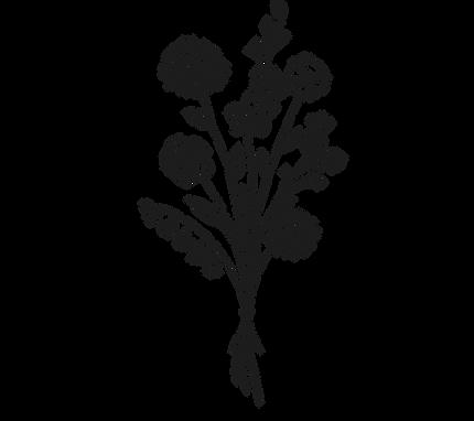 Original on Transparent logo - Copy (2).