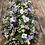 Thumbnail: Coffin Spray 6ft