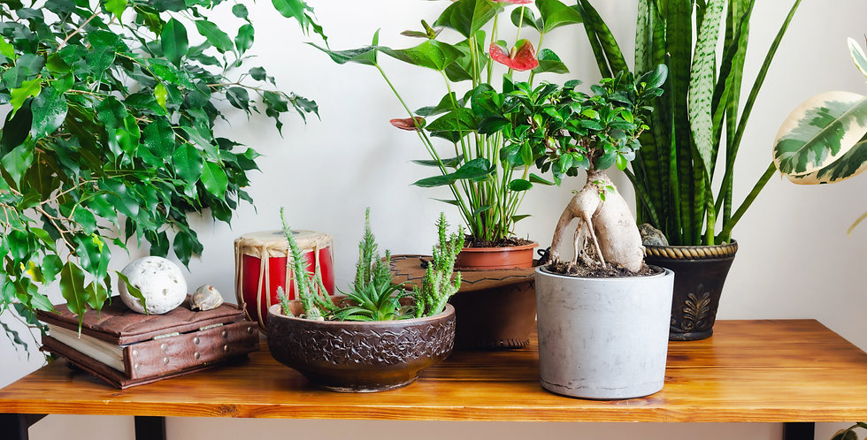 Flower and Plant Subscription
