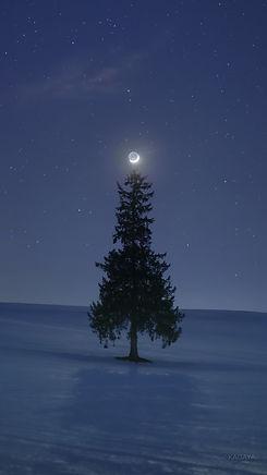 月と木.jpg
