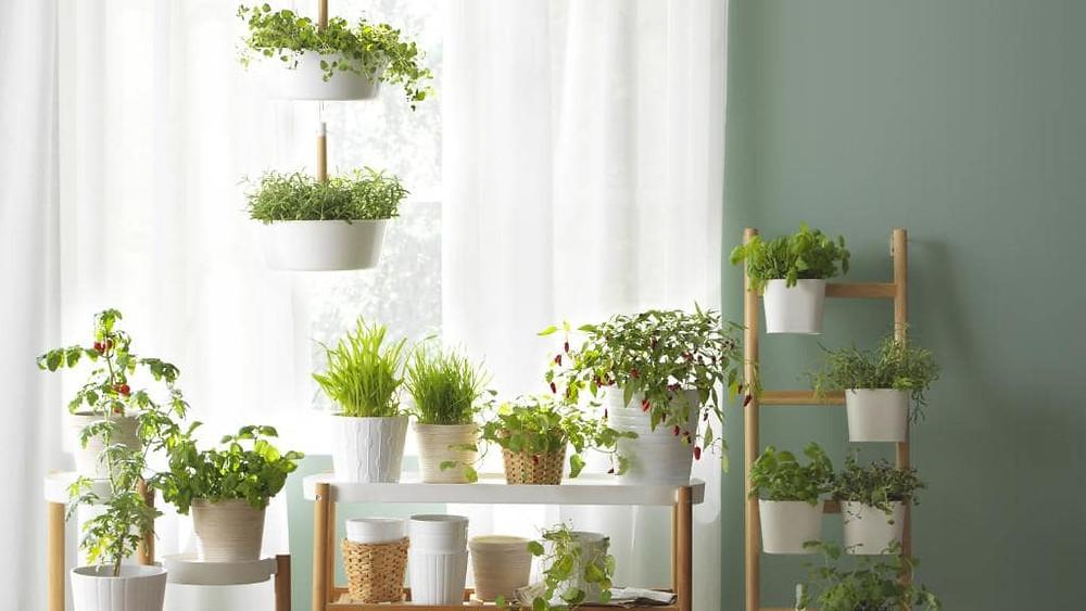 La luz en las plantas