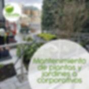 Mantenimiento de plantas y jardines crporativos