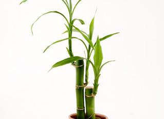 10 Plantas de interior que limpian el aire