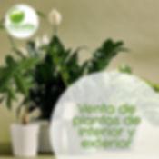 Venta de plantas de interior y exterior para oficinas y hogar