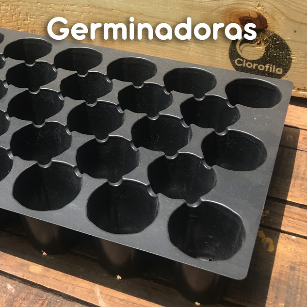 Germinadoras_01.jpg