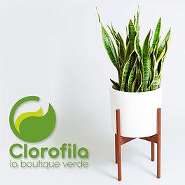 Clorofila, diseño interior con plantas