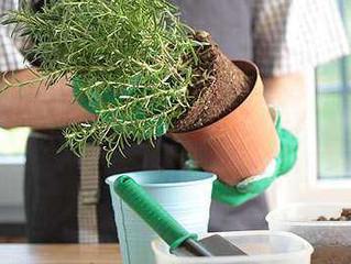 Ideas para mantener tus plantas de interior