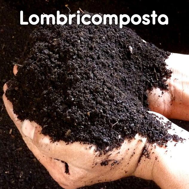 Lombricomposta_01.jpg