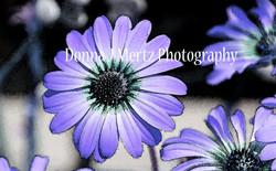 daisy water color cos bag.jpg