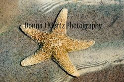 sea star.jpg