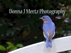 blue bird of happiness.jpg