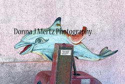 dolphin ride.jpg
